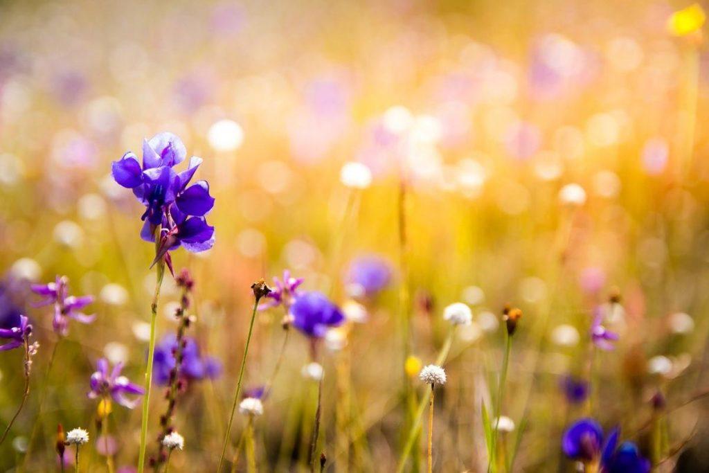 Bazi. Dzień-mistrz Drzewo Yin. Kwiaty, trawa