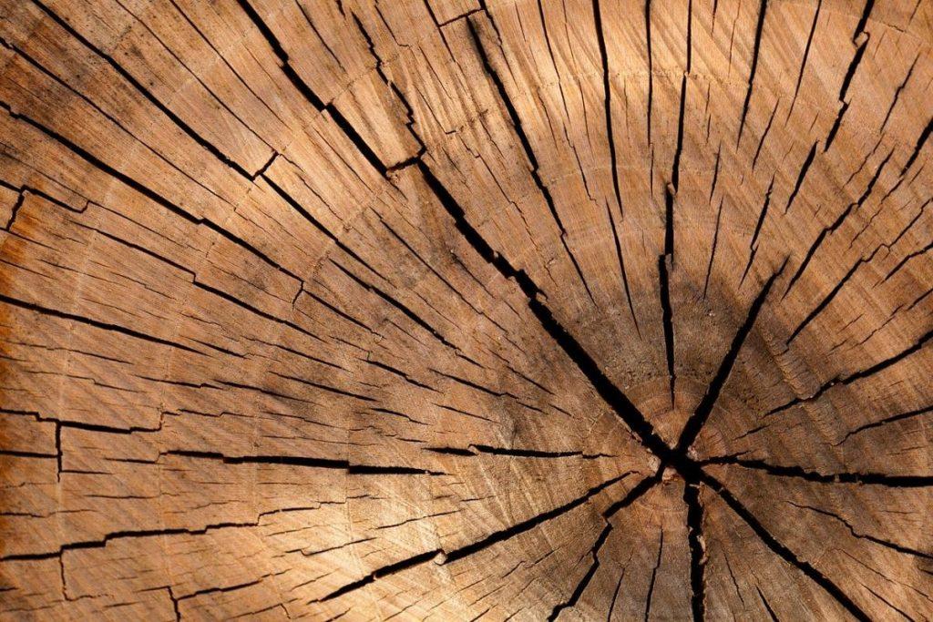 Drzewo Yang ma swoje silne i słabe strony